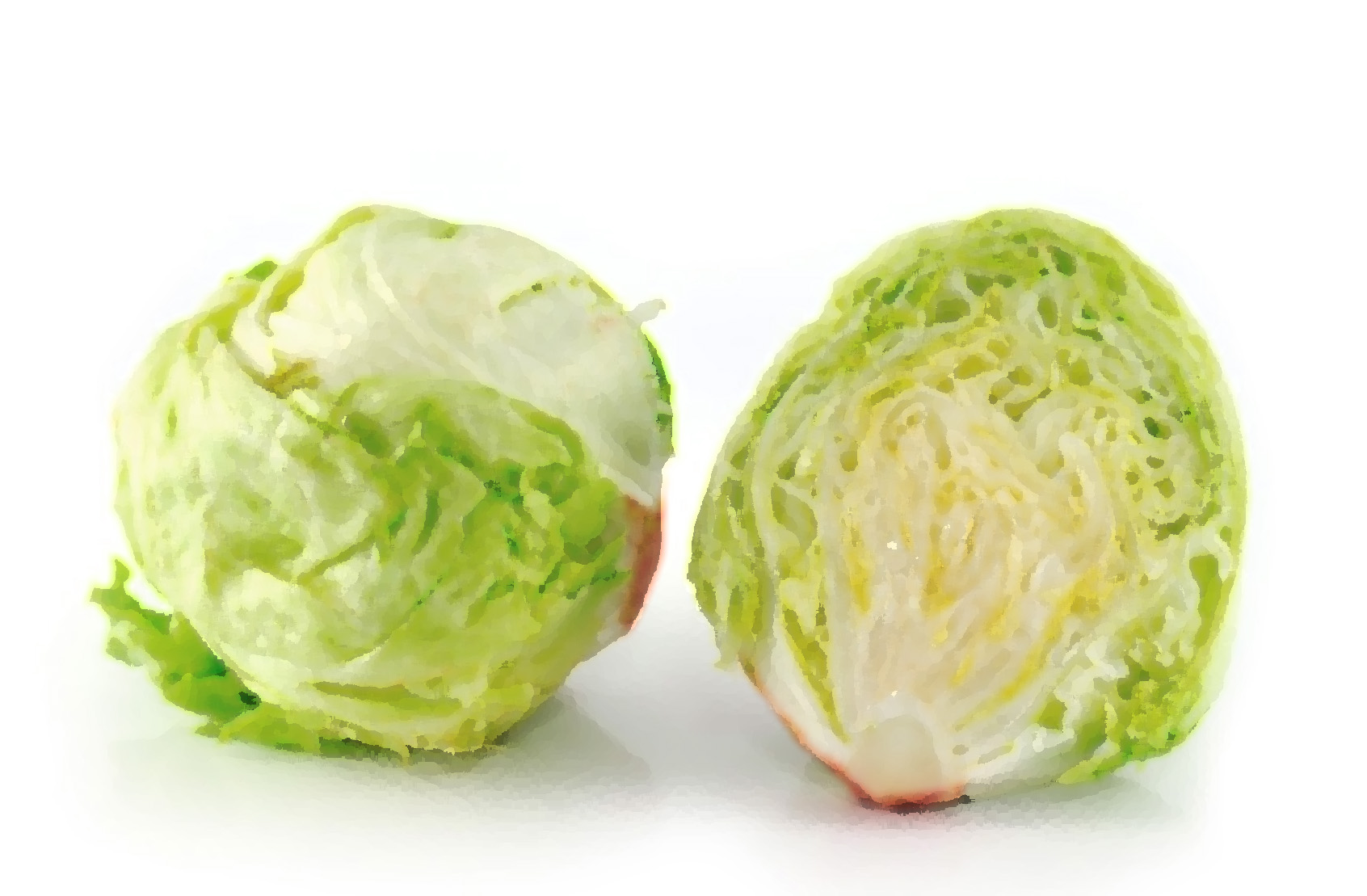 Just The Tip Of The Iceberg: A Few Facts On The Shortage of Kosher Iceberg Lettuce